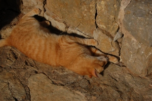 The one-eyed cat, rolling in the sunshine at the foot of a stone wall. Photo J Edwards