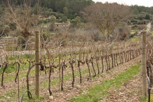 Vineyards at Son Brull Hotel and Spa