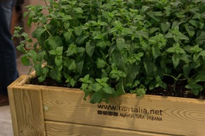 Herb planter at San Juan