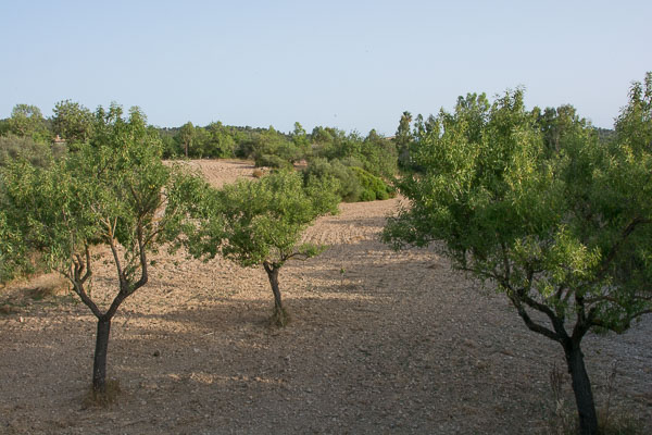 Orchards in Mallorca