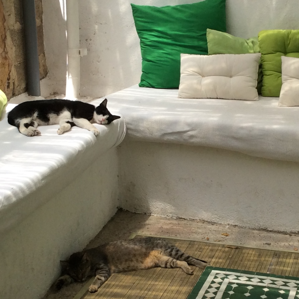Chilled-out cats in one corner!