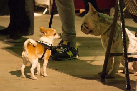 Dogs enjoy the beer fair