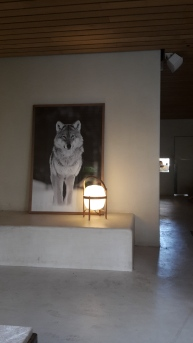Wolf photograph at Spot
