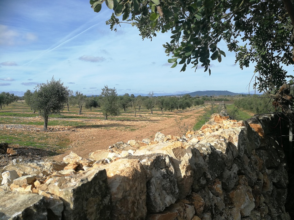 Countryside around Finca Aubocassa