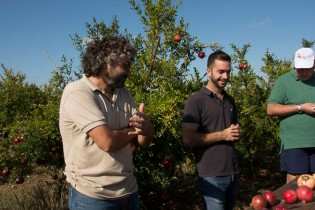 Matias (left) & Pere explain about their Terracor pomegranates